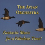 avianmusic1 The Avian Orchestra- Fantastic Music for a Fabulous Time